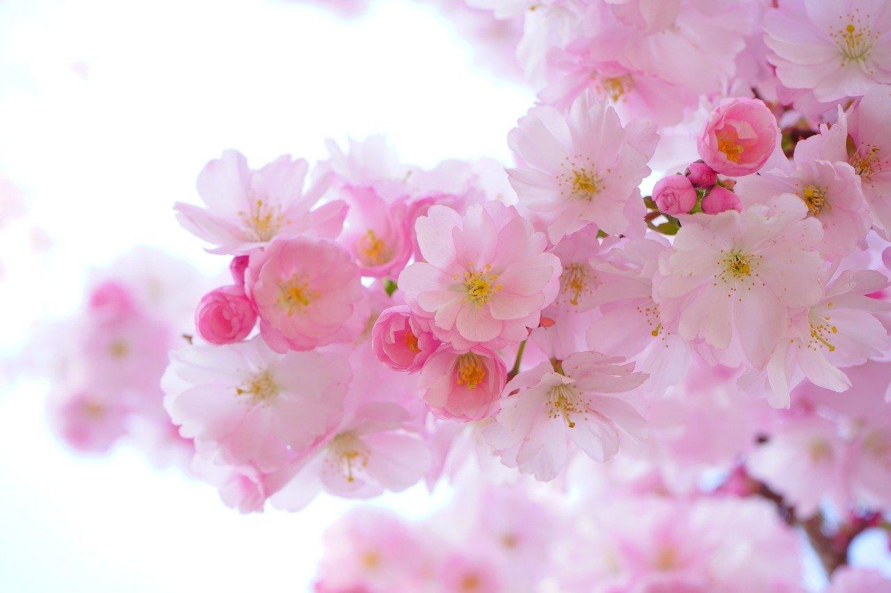 משלוח פרחים הרצליה
